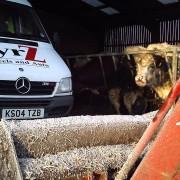 tyrZ van in cow shed